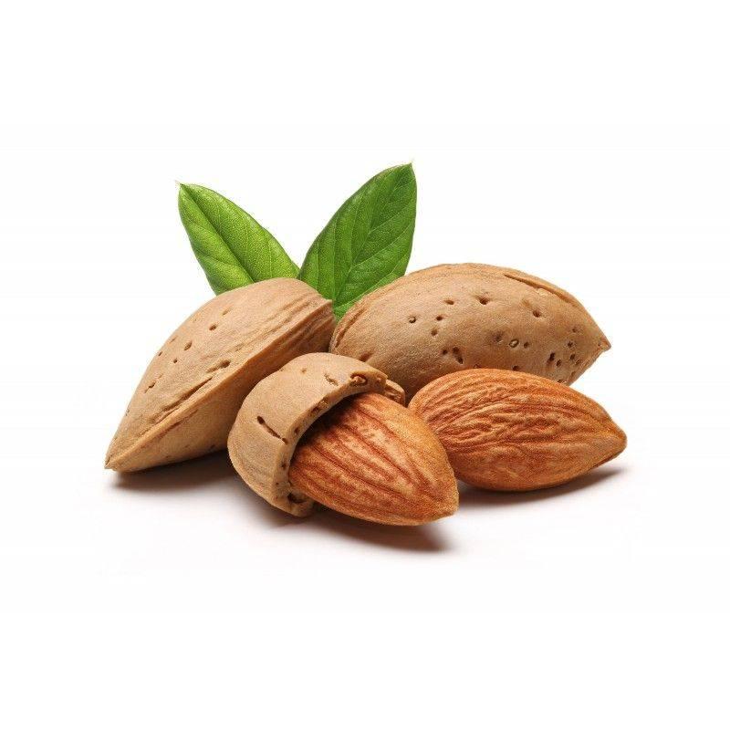 10 ml - Arôme - Amande - FA (Almond flavor)
